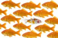 goldfish-one-different-900x600