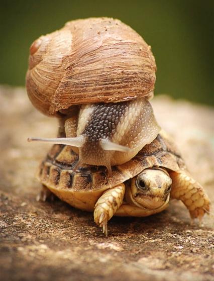 7027e103d1a4a079e6446af01ae96328--slow-down-snails